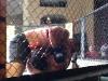 melendez-fight2